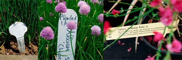 DES ETIQUETTES QUI EN DISENT LONG Que ce soit celles de certains pépiniéristes ou de jardinières astucieuses, les étiquettes peuvent noter la date de la plantation, l'origine de la plante, les prochaines tailles à effectuer ou les traitements spécifiques à appliquer, au cas où… (de gauche à droite, chez Helen Dillon, dans leVictorian Kitchen Garden, à Bloom, Dublin)