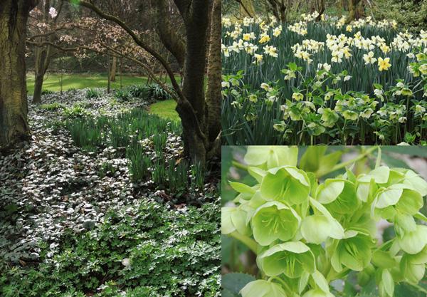 """Les """"îles"""" au printemps : une harmonie de verts, blancs et jaunes laisse la part belle aux narcisses, jonquilles et hellébores."""