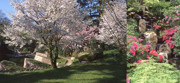 Les jardins du musée Albert-Kahn sont célèbres pour la prairie des cerisiers du Japon à l'envoûtante floraison. Le jardin japonais, oeuvre du paysagiste Fumiyaki Takano, recèle également une pyramide couverte d'azalées qui se mire dans le cours d'eau qui traverse tout ce jardin, symbolisant le cours de la vie.