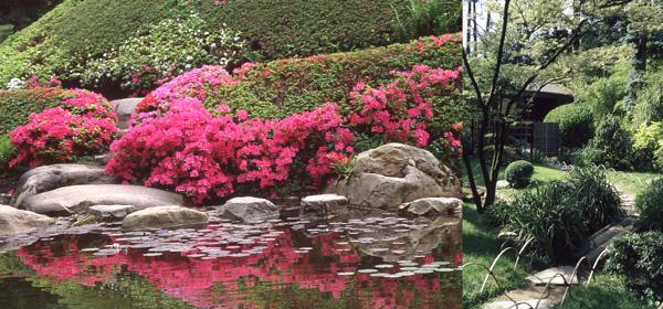 Les azalées aux nuances  rosées et fuchsia recouvrent la pyramide et se mirent dans le cours d'eau qui traverse le jardin, comme la vie au milieu du monde.