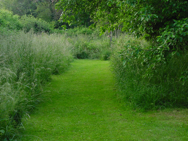 La simplicité d'un jardin où seulent poussent les semences existant dans la banque de graines du sol , peut suffire au jardinier curieux.