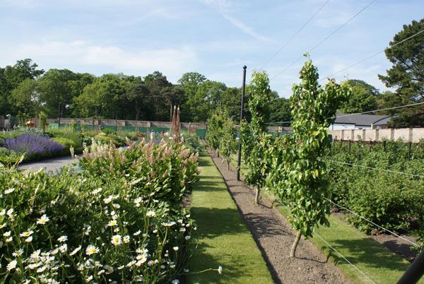 Au cœur de Phoenix Park, dans la banlieue de Dublin, ce Victorian Kitchen Garden a été restauré dans les règles de l'art.